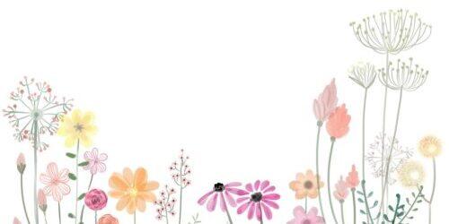 flower, petals, spring