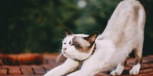 cat stretching - kinstretch